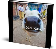 holy cow! cover